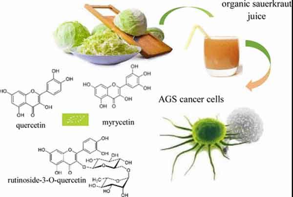 bắp cải có tác dụng ức chế tế bào ung thư dạ dày